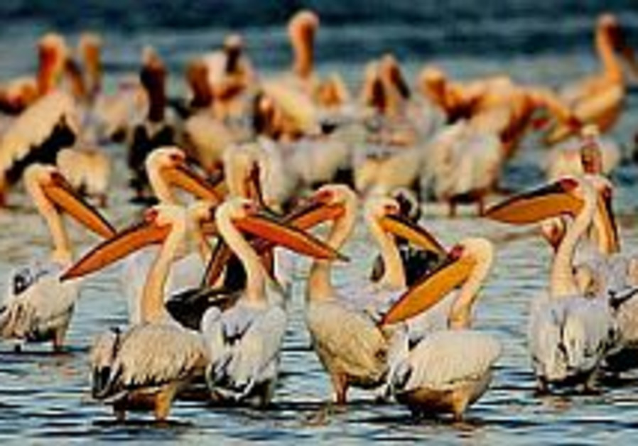 Knesset marks 30 years of birdwatching