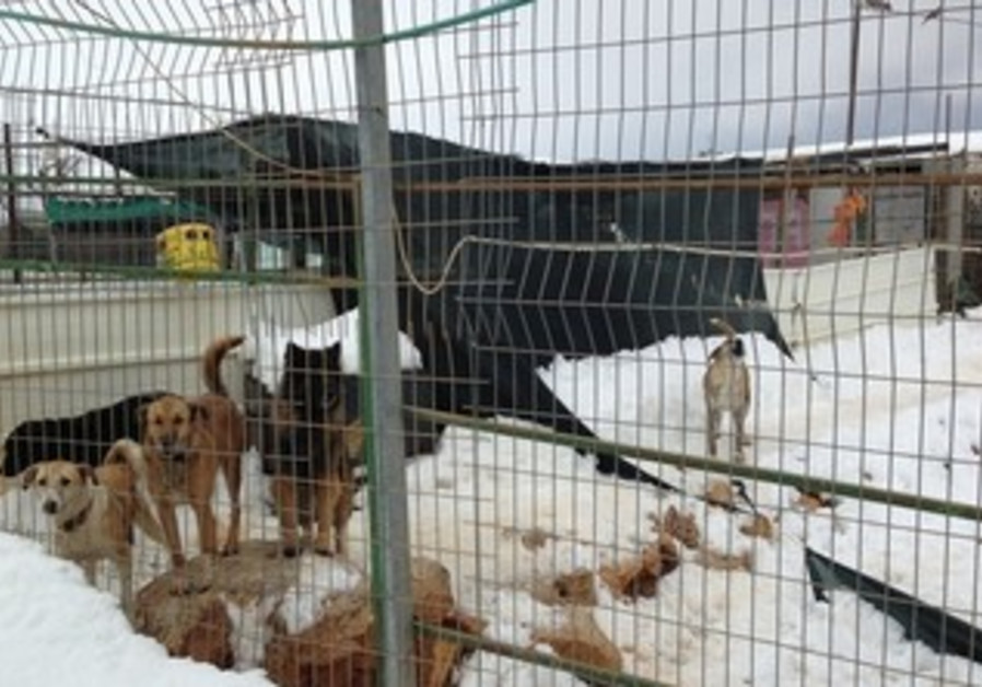 DOGS HOUSED at Jerusalem's SPCA remain without heating and shelter following Thursday's brutal storm