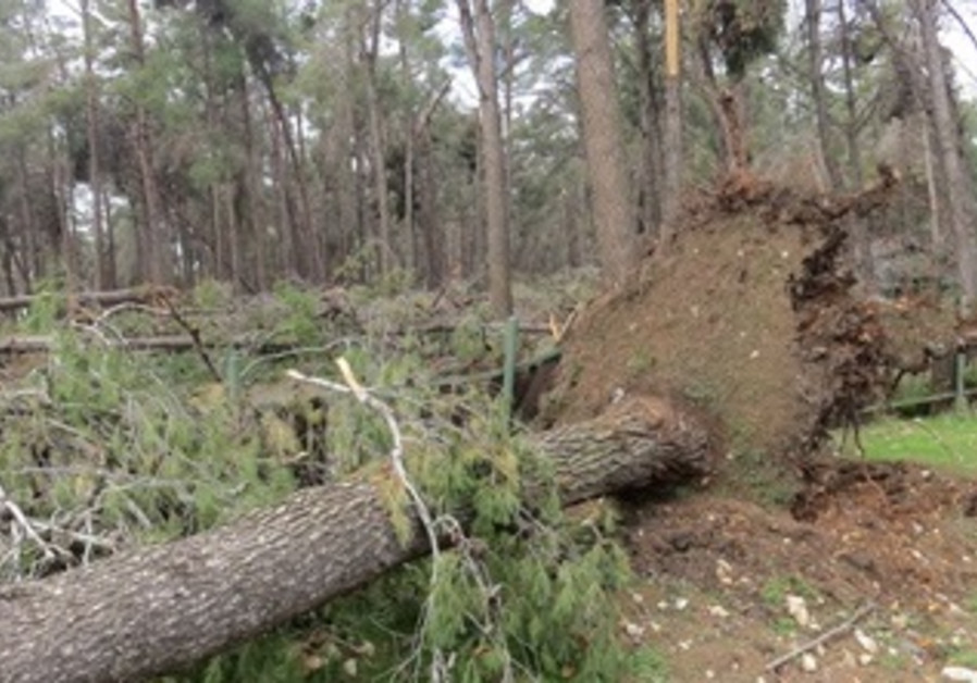 KKL-JNF Foresters Evaluate Storm Alexa Damages-1