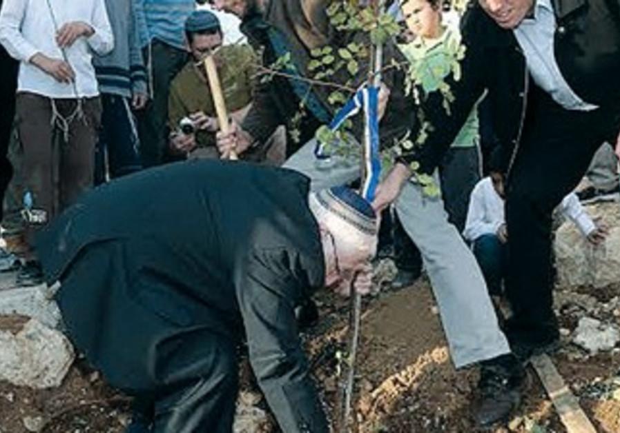 Kiryat Arba chairman Malachi Levinger plants tree, January 15, 2014