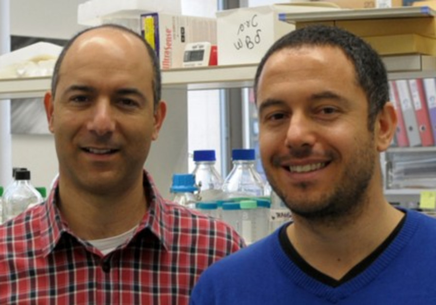 Dr. Rotem Karni and graduate student Avi Maimon.
