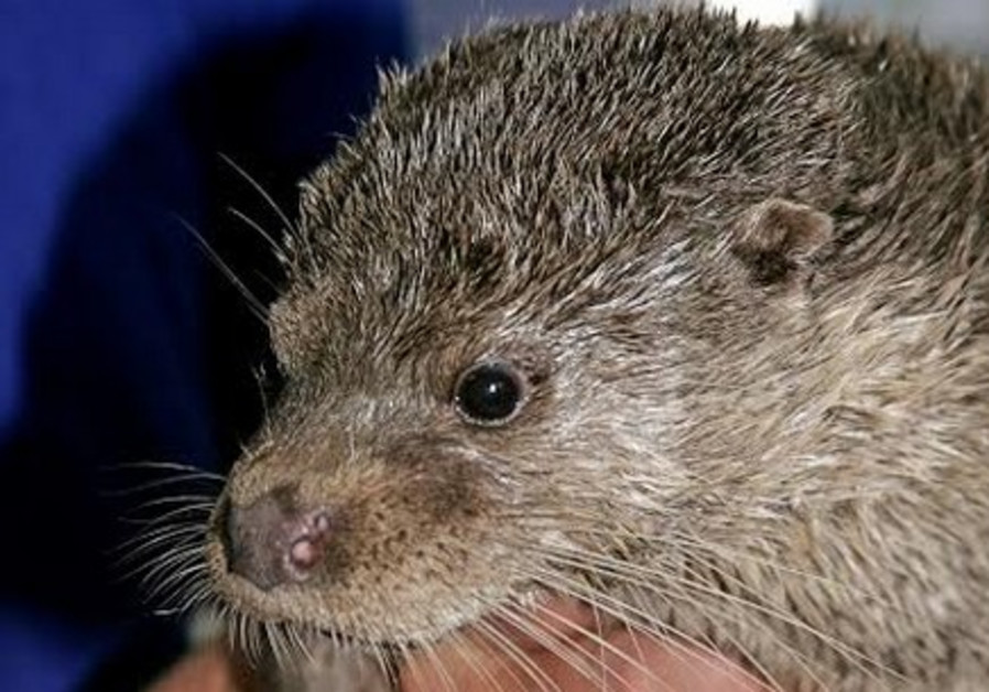 Escaped petting zoo otter found in Galilee after biting hikers