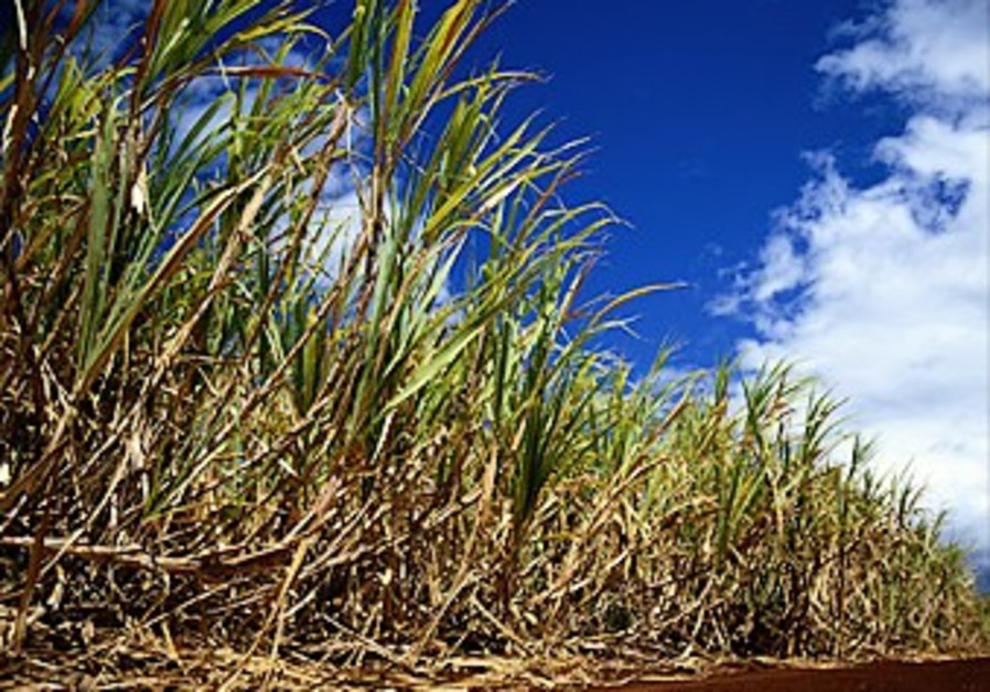 The sugar-ethanol equation