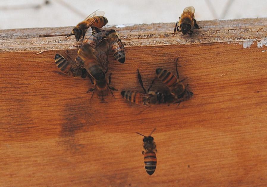 Bee death