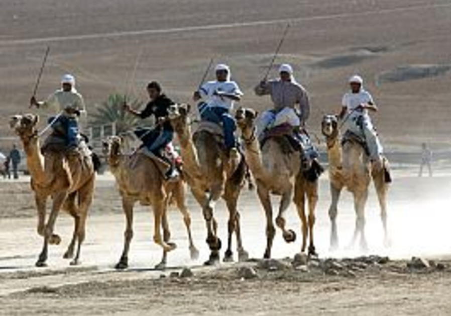 bedouins on camels in race negev desert 298
