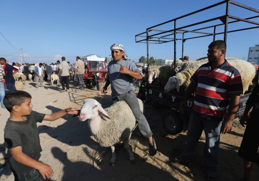 A PALESTINIAN vendor shows a sheep to customers at a livestock market in Khan Yunis