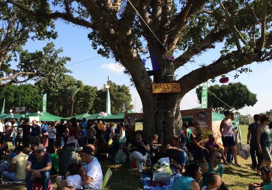 Jacob's Ladder Festival