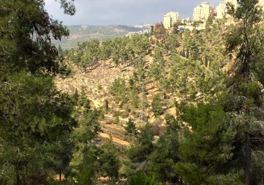 View of the Jerusalem forest