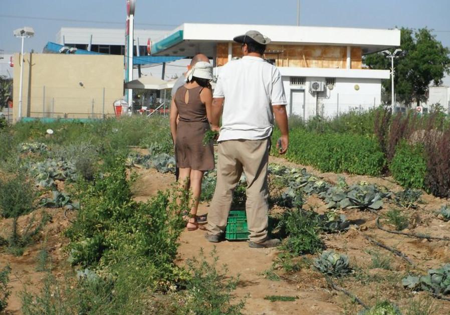 Israeli farm