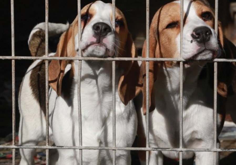 THESE DOGS were among the 67 rescued