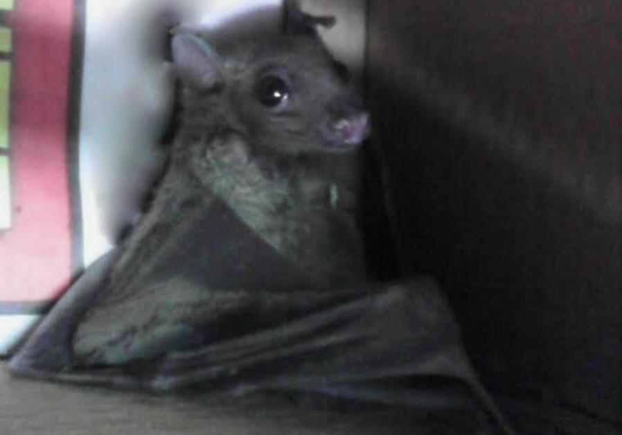 Baby fruit bat saved by Magen David Adom paramedics