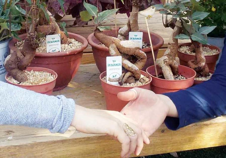 Eilat's Botanical Gardens
