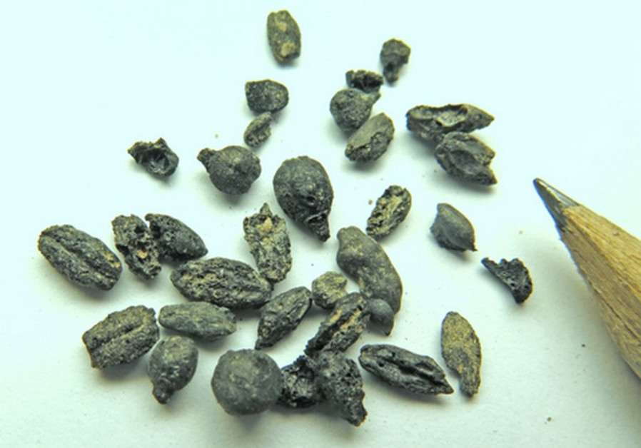 wine seeds
