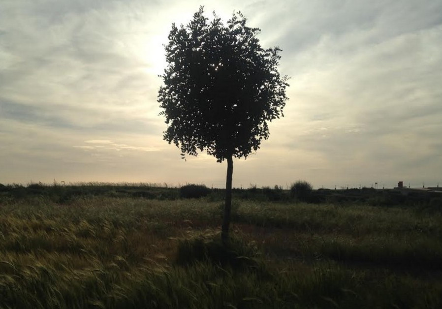 Tree at Park Ariel Sharon