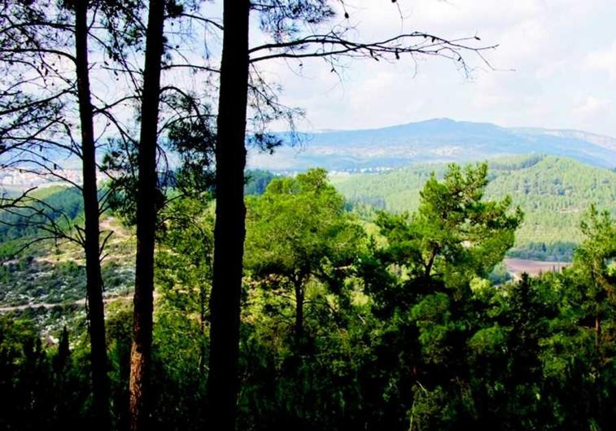 Forêt typique du paysage israélien