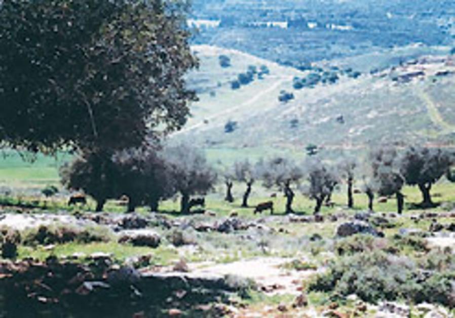 ACRI claims Mitzpe Aviv charter aims to bar Arabs