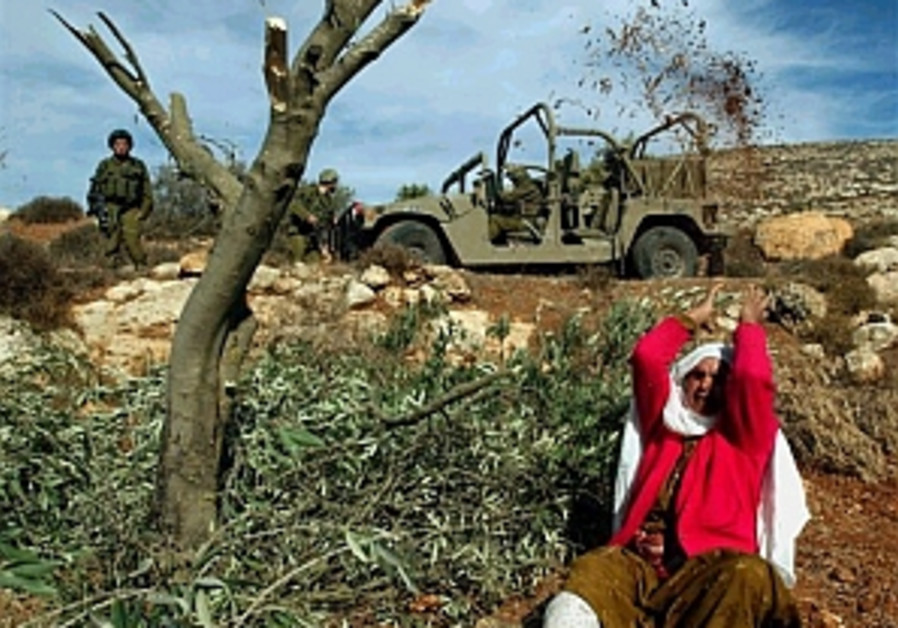 Olmert condemns olive tree uprooting