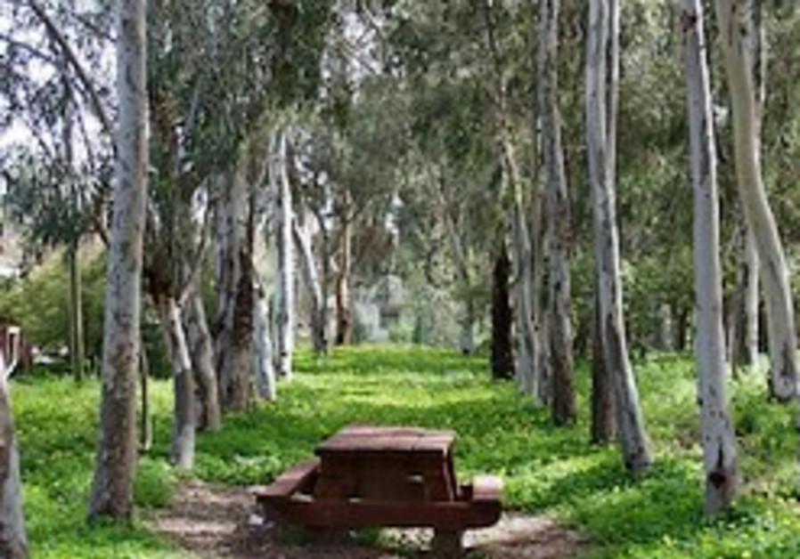 Kinneret: 14-year-old boy killed by tree