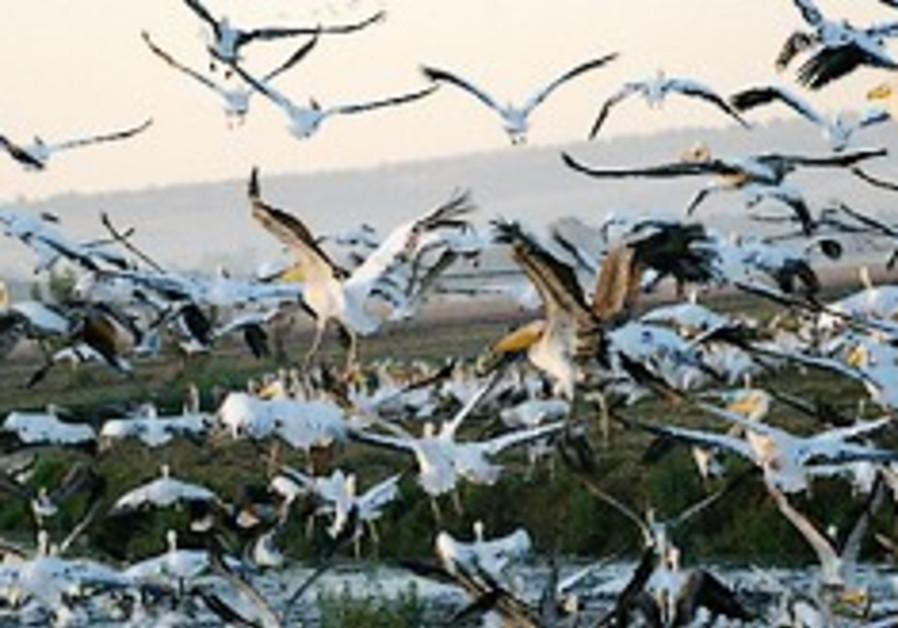 Hula Lake Park wins international recognition