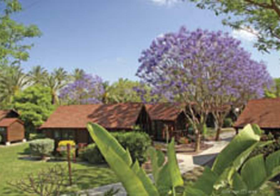 Green eggs and trees: Kibbutz Nir David