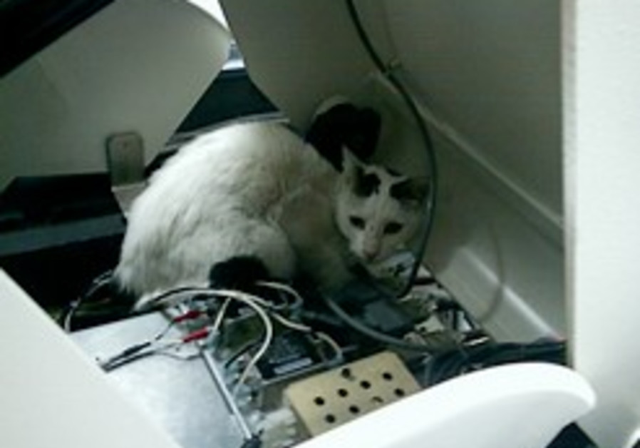 Cat scans PET scan