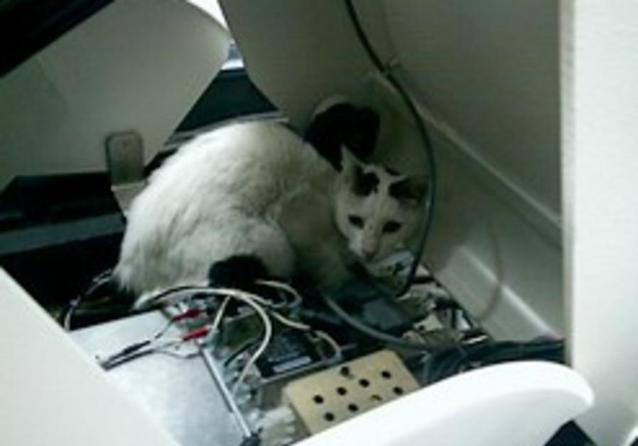 Cat scans PET scan