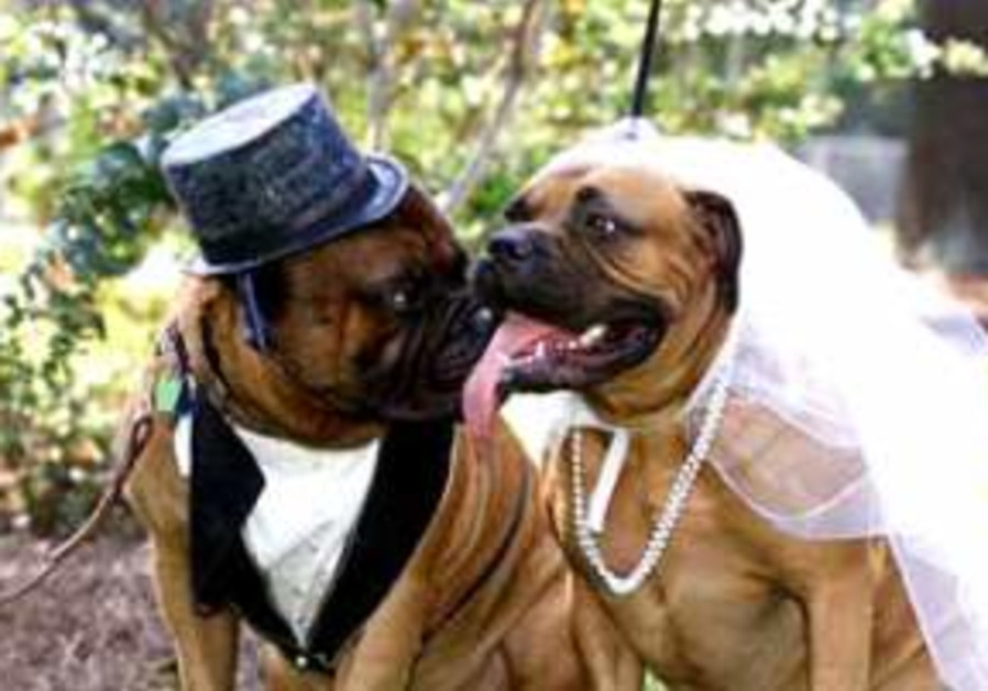dogs in suit & wedding gown