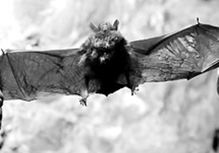 Mysterious bat fungus threatens US crops