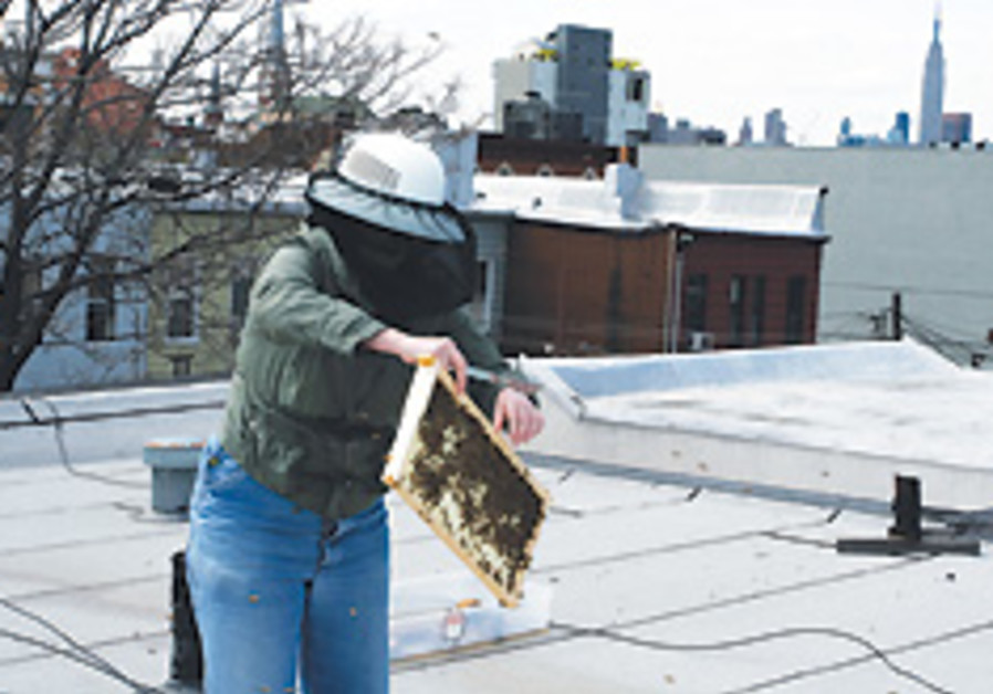 New York urban beekeepers swarm City Hall to protest ban