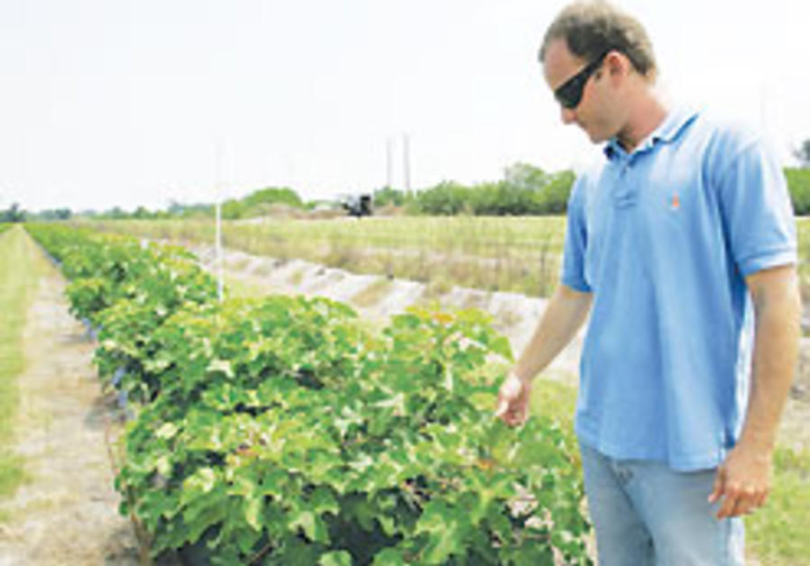 Jatropha hyped as biofuel alternative