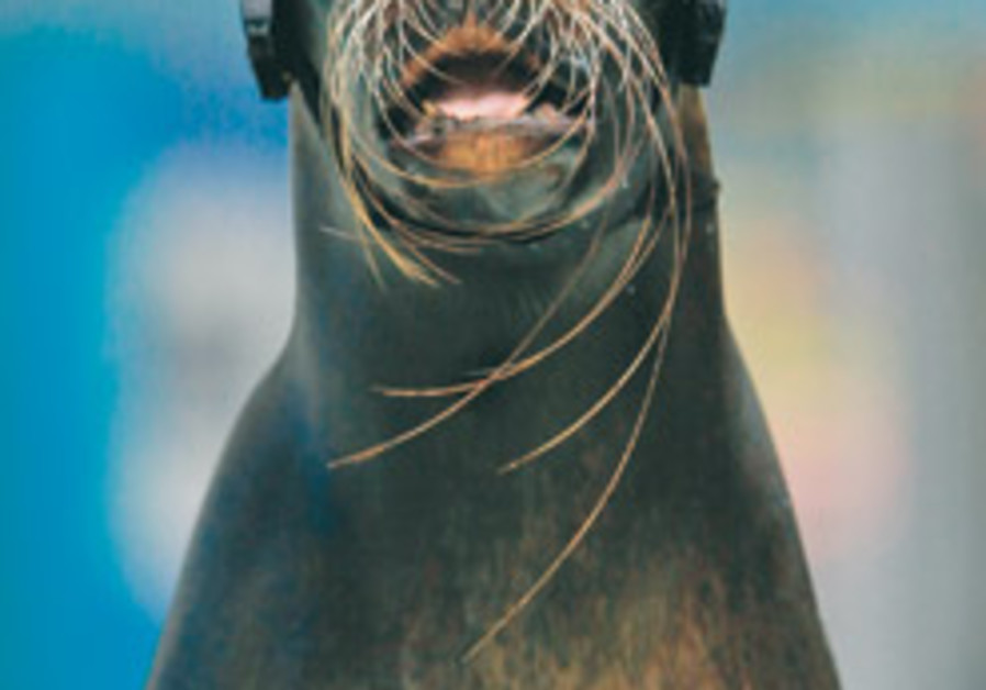 EU gives final OK to ban seal products