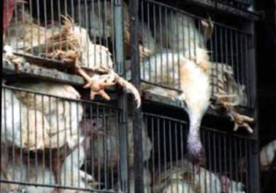 Animal rights group urges Sharon to go vegetarian