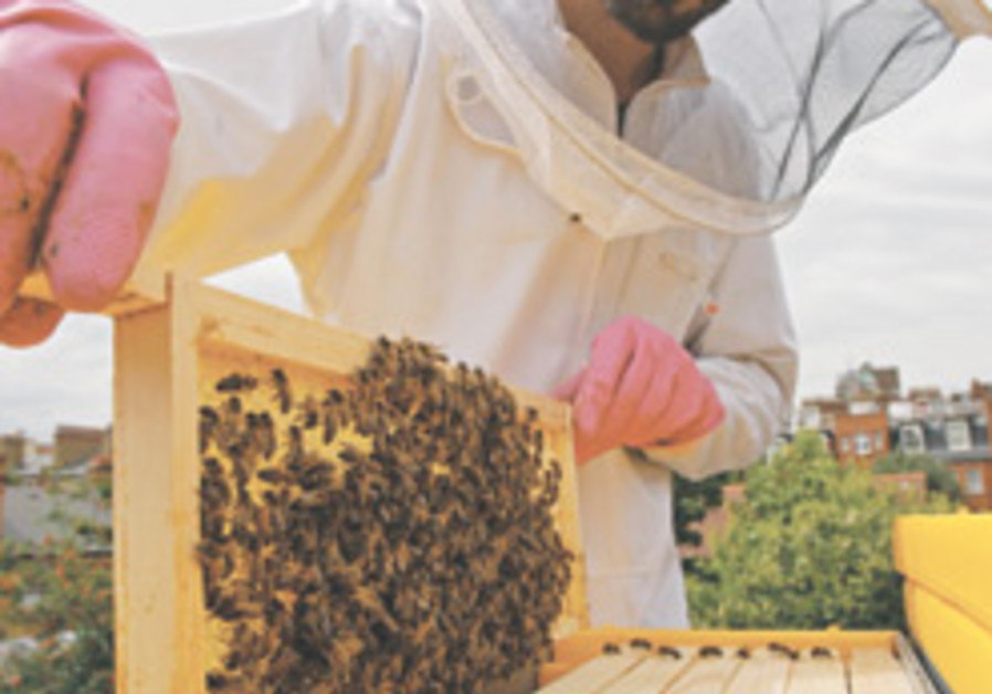 Britain seeks backyard beekeepers