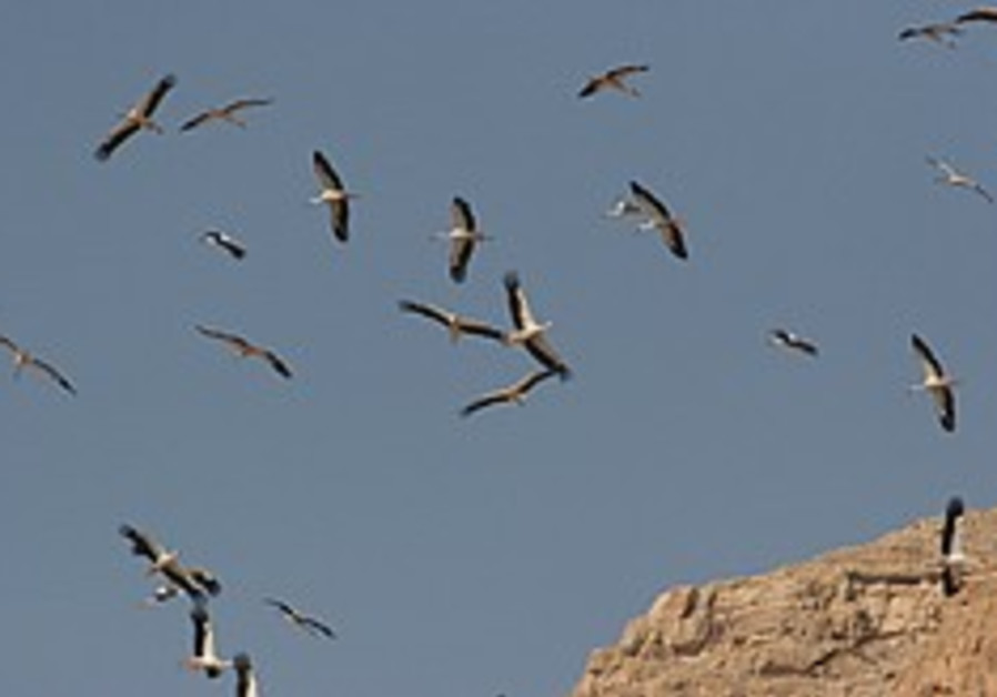 Scientists on the lookout as large birds begin to 'invade'