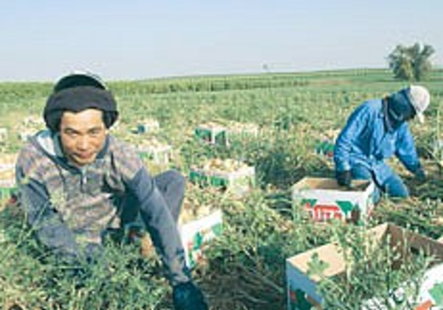 Farmers to withhold produce supply if demand for more workers not met