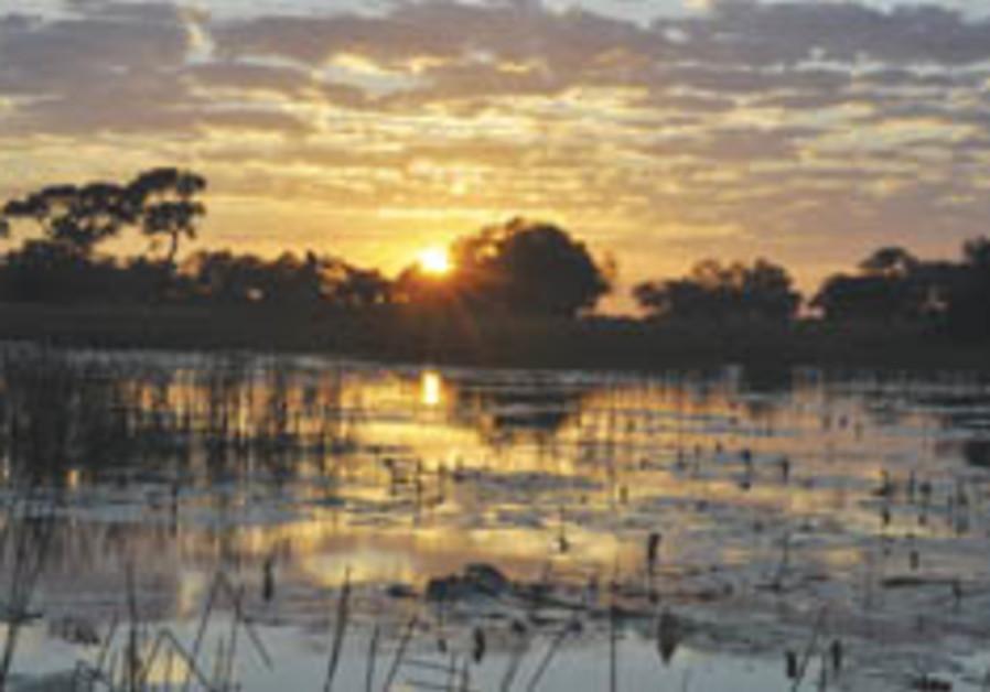 Botswana's Okavanga - a lush paradise in the middle of a desert