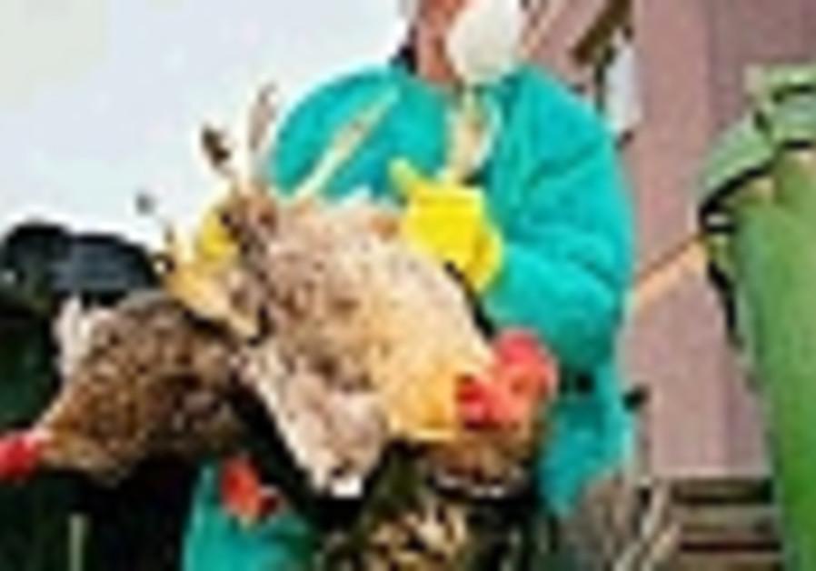 chicken killing 88