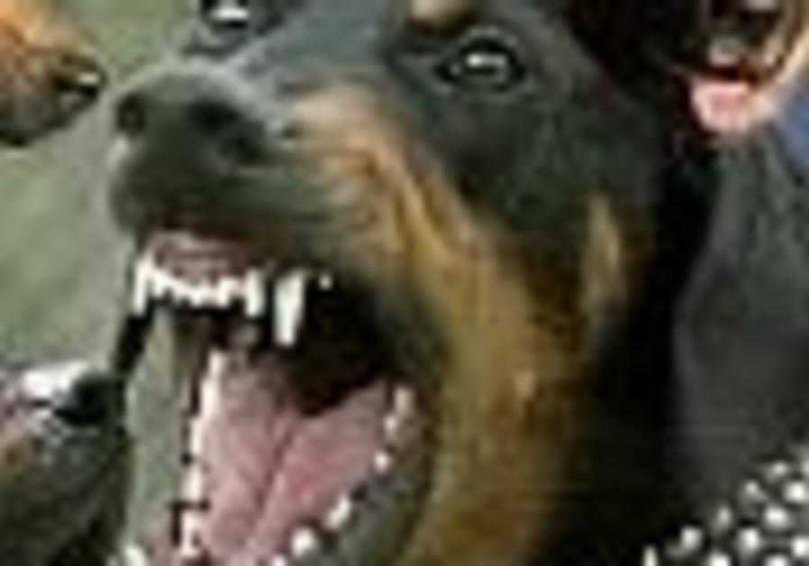 attack dog 88