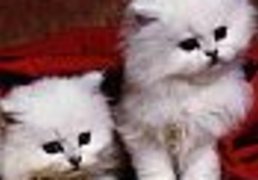 Volunteers sought to save animals on Lag Ba'omer