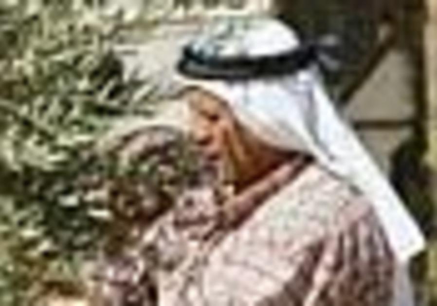 olive harvest 88