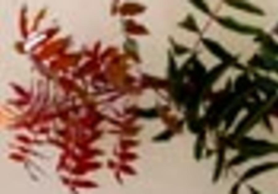 pistachio tree 88