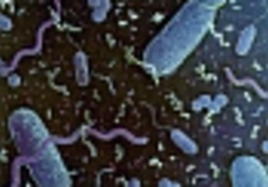 bacteria 88