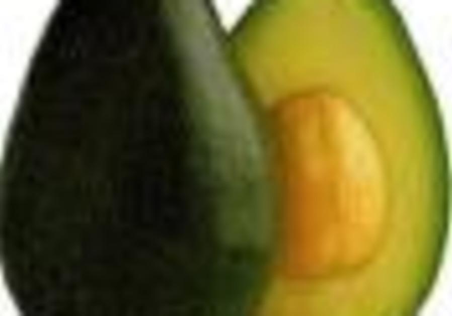 avocado 88