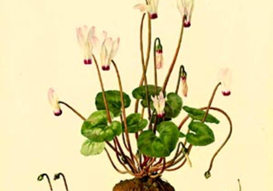 flower art 88 298