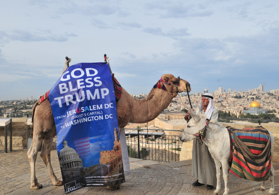 A camel outside the Old City sports a 'God Bless Trump' banner in celebration of the US President's declaration recognizing the city as Israel's capital. (Rafi Kotz)