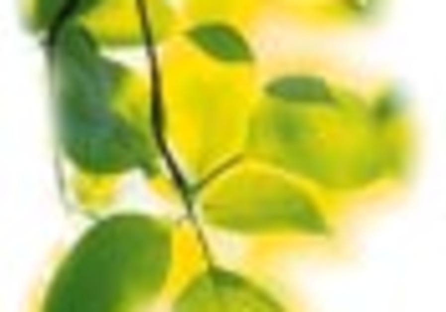 leaves 888