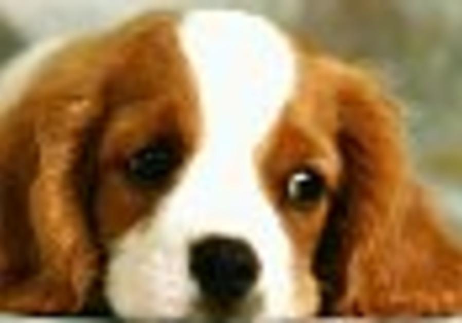 cute dog 88