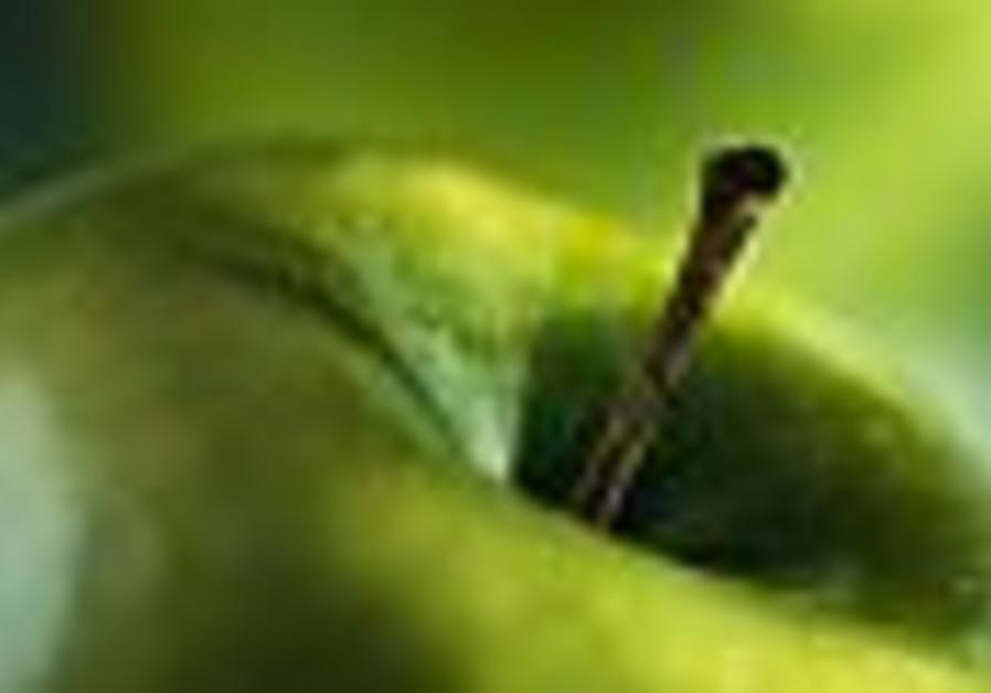 apple 88