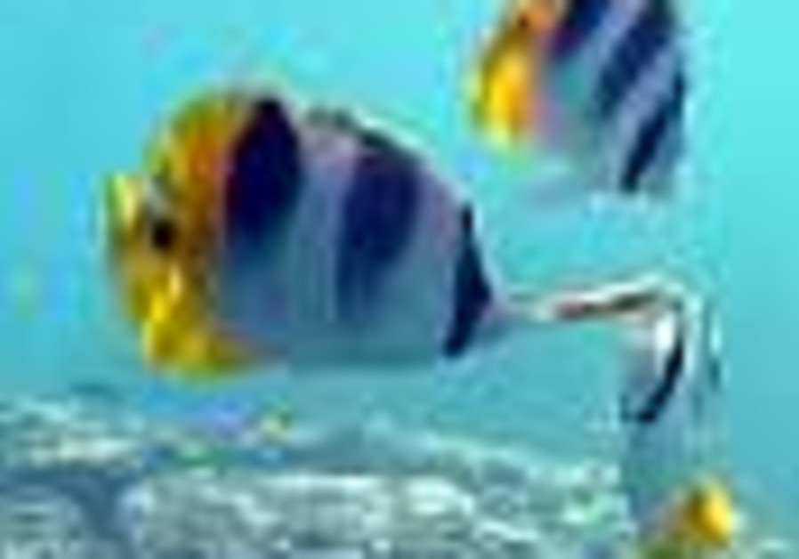 Haifa couple spared death after eating poisonous fish