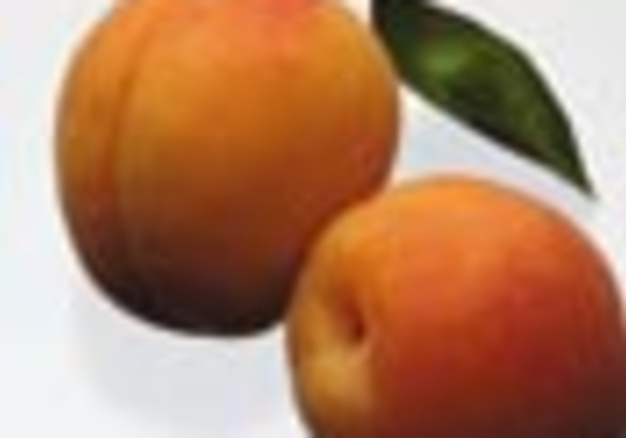 apricots 88